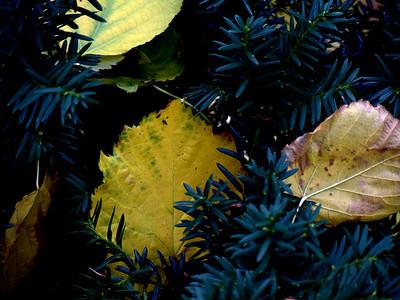 Fall Colours 8