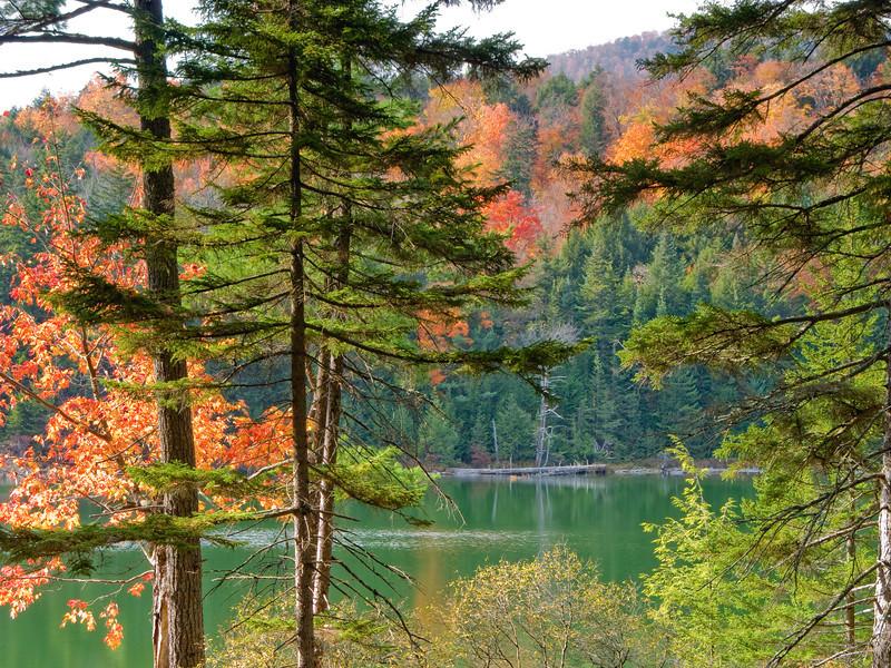 foliage, 秋景 foliage