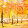 foliage, 秋景
