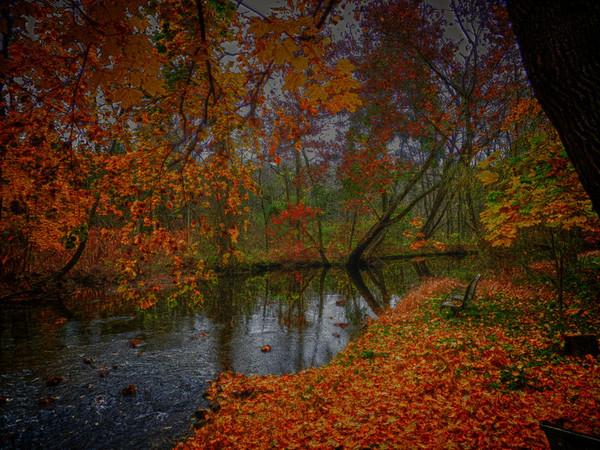 Surreal foliage