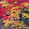 Colorful Foliage