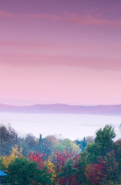 Foliage at Dawn