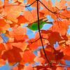Foliage & Bird