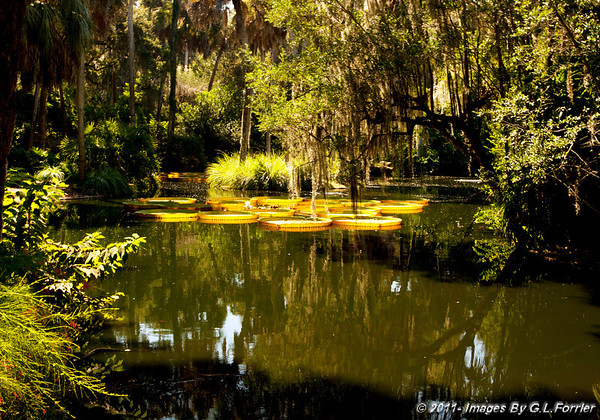 Lily Pond View