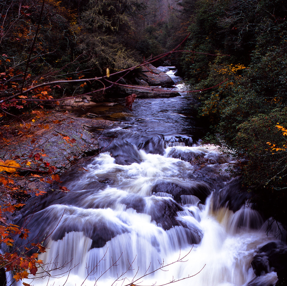 Stream and fall leaves.