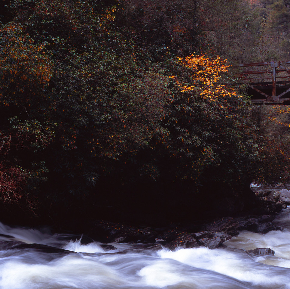 Running stream in fall