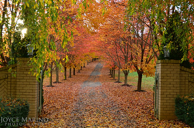 Fall colored entrance to Northern Baltimore County home -- # DSC_8670