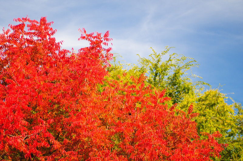 Fall-Colors-Leaves-In-Fall_D308340