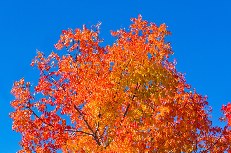 Fall-leaves-Blue-Sky_DSC09