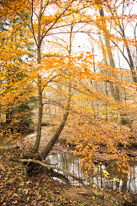 Calico Woods
