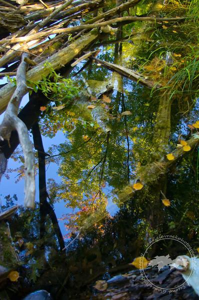 Reflection on Ransom Lake, Benzie County, MI