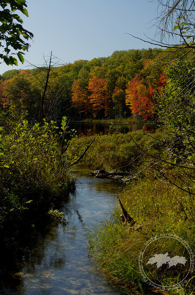 Creek running into Ransom Lake