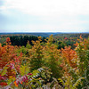 Lookout point south of Glen Arbor, MI.