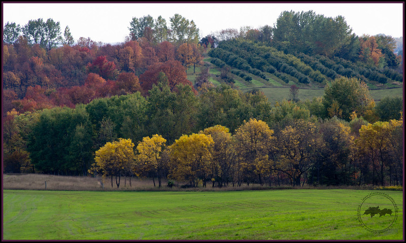 View of hillside from a seasonal road in Leelanau County, MI