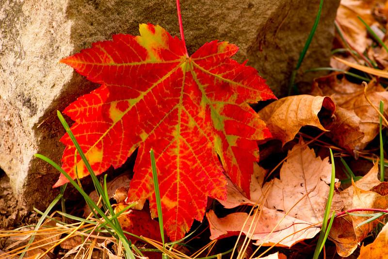 red leaf against rock 10