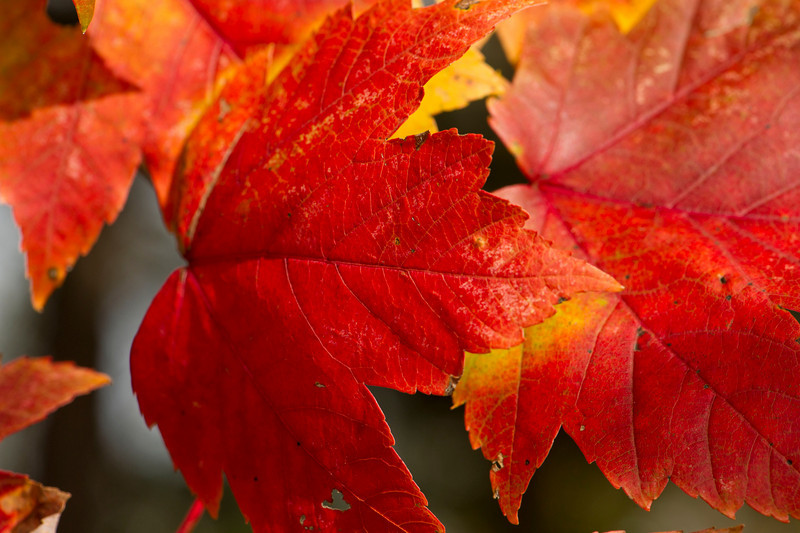 few red leaves close