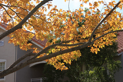 """Fall"" in South Fla., December 2010"