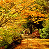 October pathways