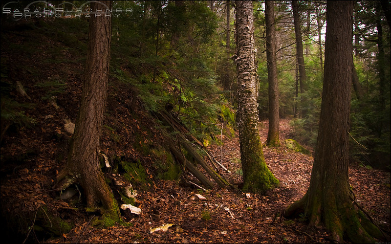 Lake Of The Woods Trail. Killarney Provincial Park, Ontario.