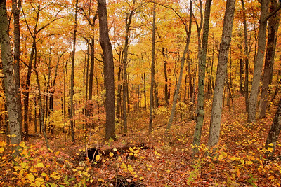 Brown County State Park, near Nashville, IN.