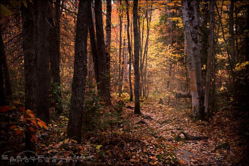 Chikanishing Trail. Killarney Provincial Park, Ontario.