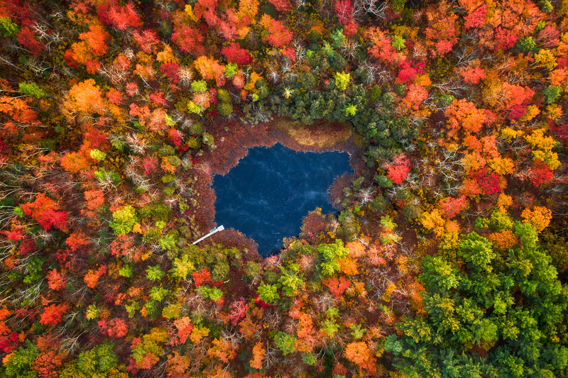 Autumn Pond
