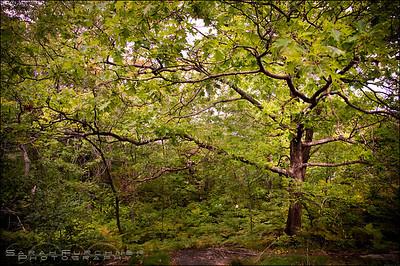 Silver Peak Trail. Killarney Provincial Park, Ontario.