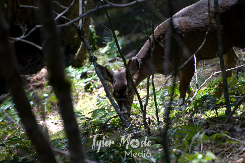 89  G Deer