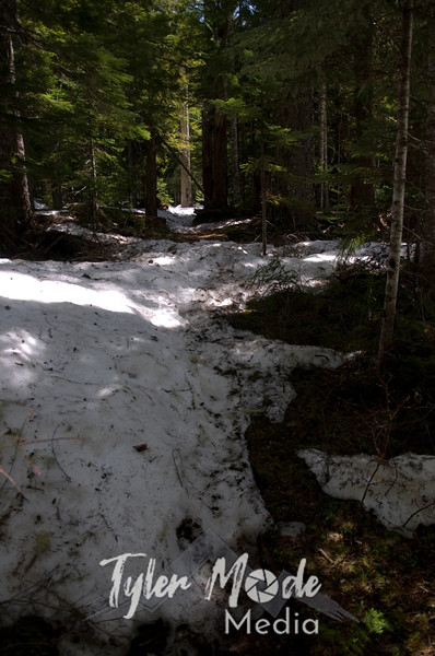 112  G Snowy Trail Deer