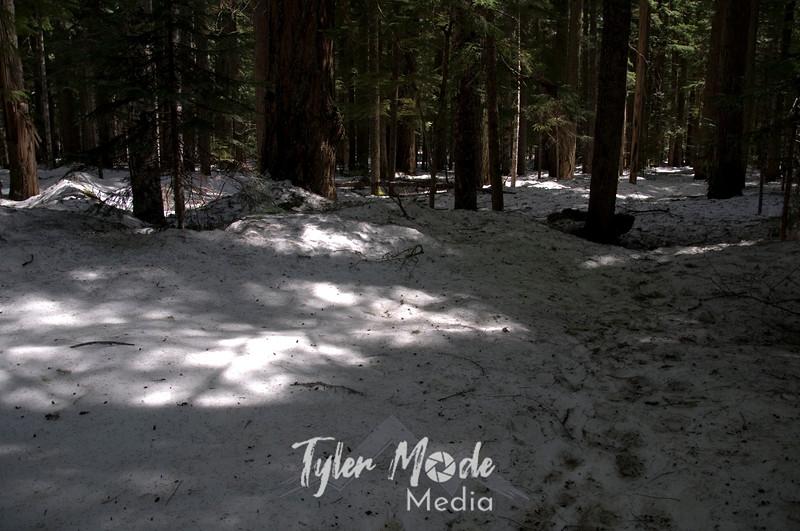 113  G Snowy Trail