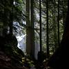 54  G Falls and Trees V