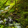 11  G Falls Creek