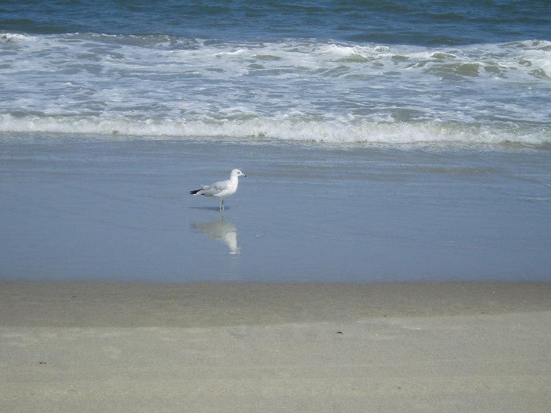 Tybee Island, GA 8-06