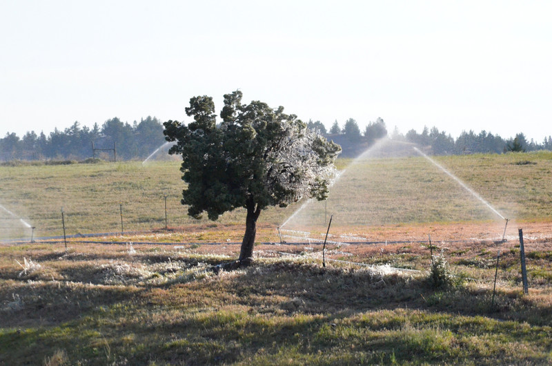 A hand line irrigation system that has left a covering of ice in the early morning