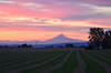 A roll of crops waiting to be baled with a pink and blue sunset over Mt. Hood