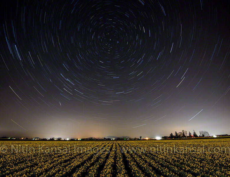 Star Trails and Daffodils Fields<br /> <br /> Shooting a star trails with daffodils fields was dream come true. I've been eyeing on weather for last 2 years but things did not align for me until this year when i was able to shoot them.