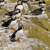 Farne Islands