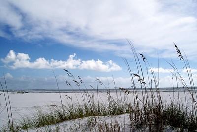 Sea Oats protecting Crooked Island Beach