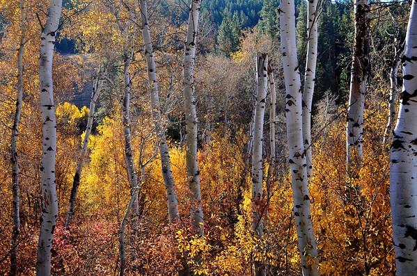 Cub Creek Fall.