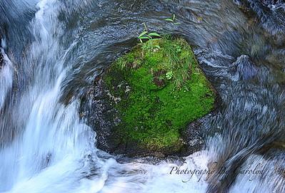 Moss island
