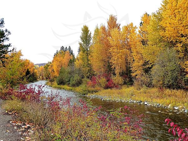 Twisp River ~ Fall.
