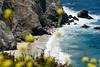 Beach thru Wildflowers by Bixby Bridge<br /> Big Sur, California<br /> July 2007<br /> <br /> Copyright © 2007 Rick Kruer<br /> rickkruer.com<br /> <br /> D200_2007-07-25DSC_3279-BixbyBridgeBeachCloseup-nice-2.psd