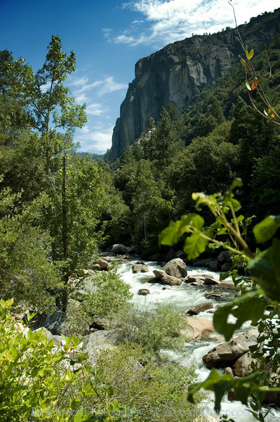 A tall view of the Merced River with scenic view taken on our first stop after leaving the Cedar Lodge hotel in El Portal, CA as we make our way through Yosemite on Tioga Pass road. A beautiful, scenic spot!<br /> <br /> ND70_2006-07-29DSC_6251-YosemiteMercedRiverViewTall-nice-2 copy.jpg
