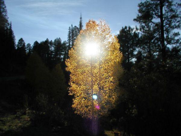 Beautiful Golden Aspen in the Afternoon Sun (PA150 (50)-BeautifulAspenInTheSun-2 copy.jpg)