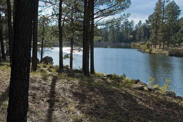 Shoreline of Little Bear Lake near Pinetop, AZ (ND70_2005-10-14DSC_1925-LittleBearLakeView-2 copy.jpg)