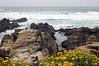 The California Coast on the 17 Mile Drive Monterey, CA. Wildflowers were growing everywhere.<br /> ND70_2006-07-09DSC_4274-OceanRocks-2 copy.jpg
