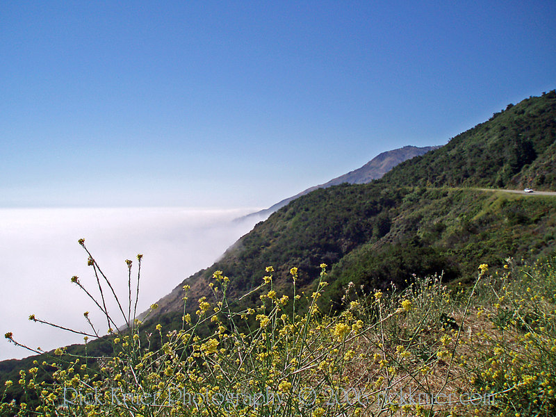 Eileen's photo of wildflowers and heavy fog on the coast road near Big Sur, CA.<br /> P7070210-FogOceanRoad-2