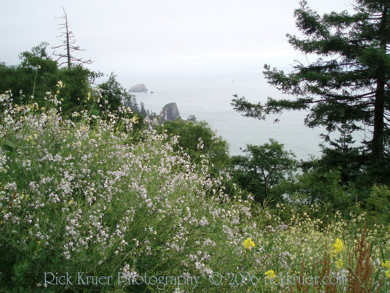 Eileen's photo of the ocean wildflowers near Crescent City, CA.<br /> P7090302-OceanFlowersNearCrescentCity-2.jpg