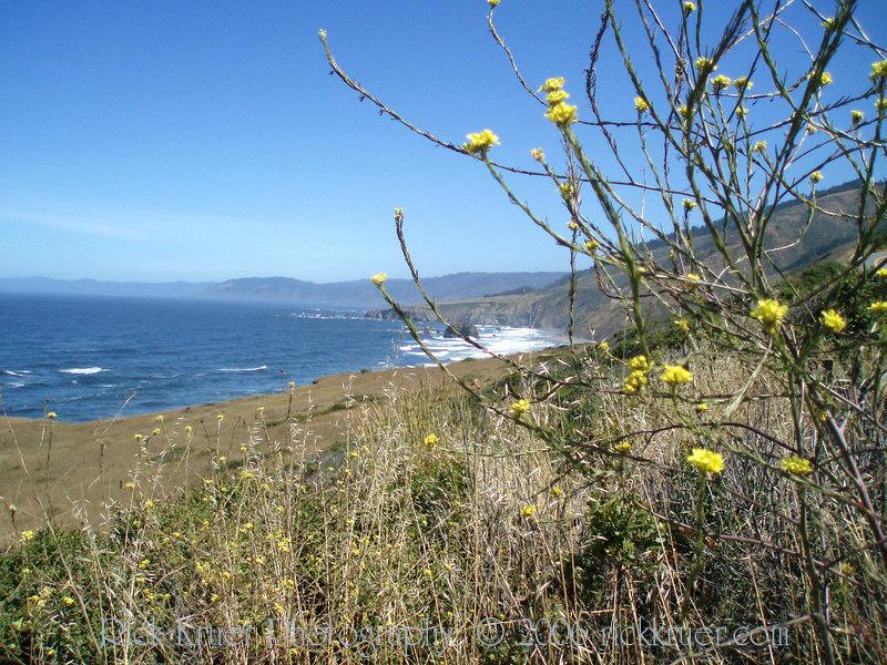 Eileen's photo of the coast north of Fort Bragg, CA on California coast road CA1.<br /> P7090273-OceanFlowers-2.jpg