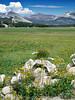 Eileen's photo of the nice scenic view of Tuolumne Meadows on Tioga Pass road toward the eastern entrance of Yosemite.<br /> <br /> P7280598-FlowersTuolummeMeadows-2 copy.jpg